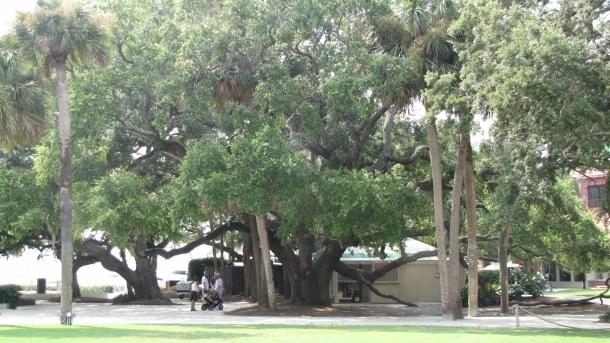 Harbortown - Hilton Head