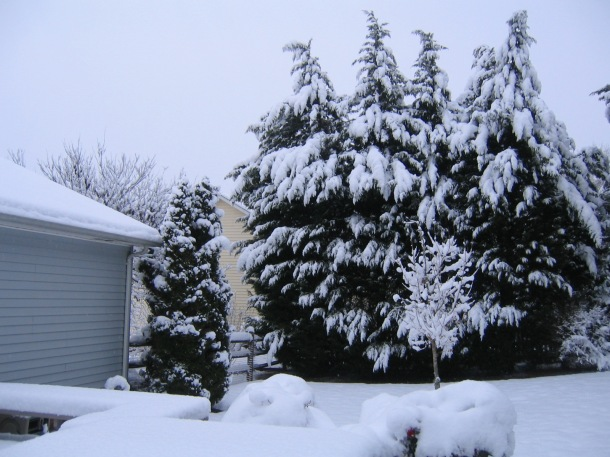 My Side Yard During A Christmas Snowfall