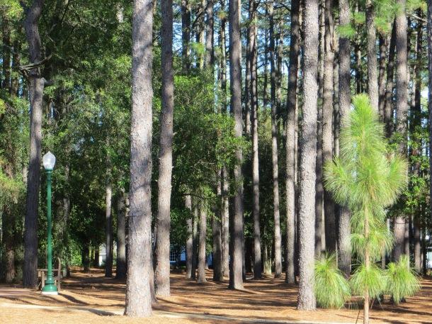 A park across the street from the Village of Pinehurst