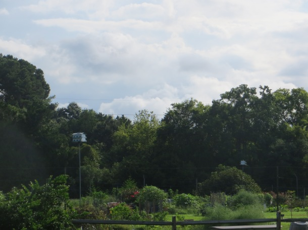 The community Heritage Garden in Sea Pines