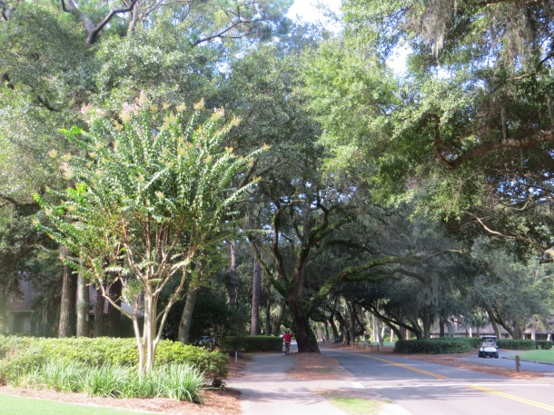View of Bike Trail In Sea Pines Plantation