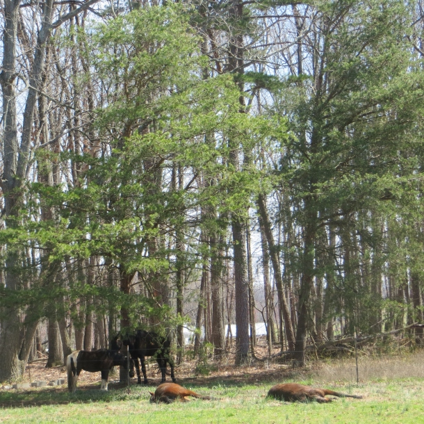 Horses in a pasture beside the general store