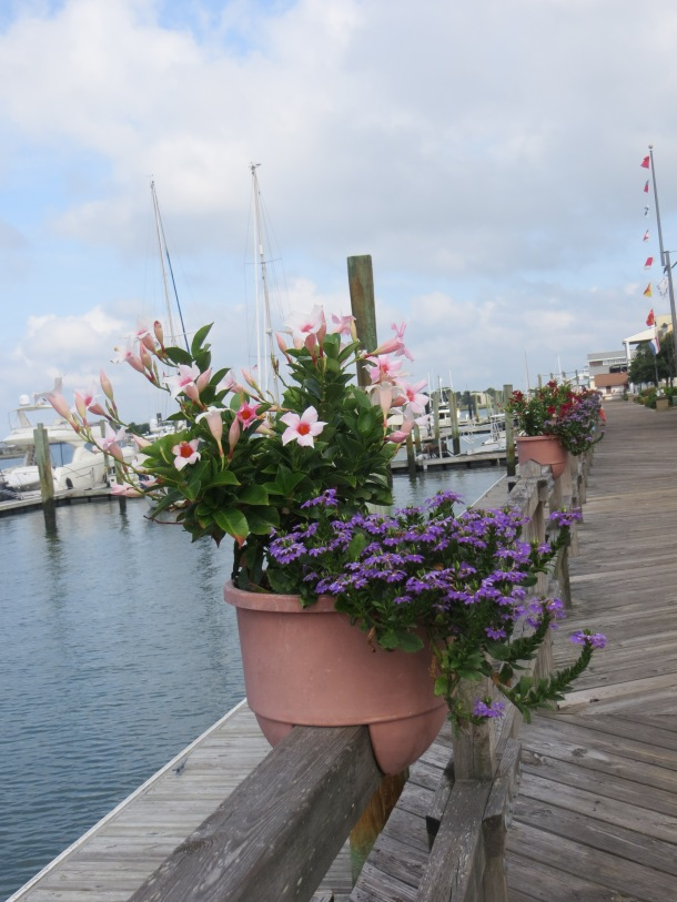 I loved this flower pot perched on the boardwalk in Beaufort